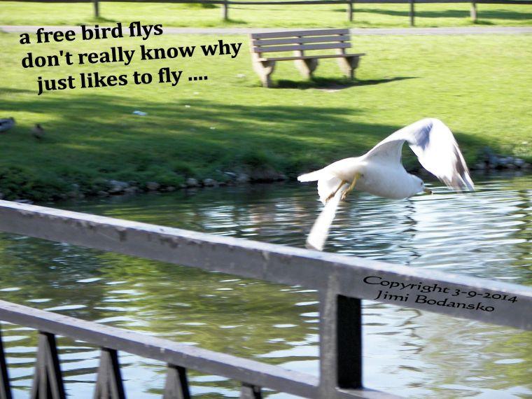 freebird flys ....x